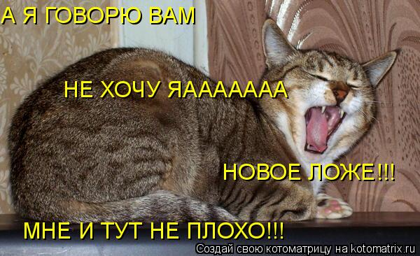 Котоматрица: А Я ГОВОРЮ ВАМ НЕ ХОЧУ ЯААААААА НОВОЕ ЛОЖЕ!!! МНЕ И ТУТ НЕ ПЛОХО!!!