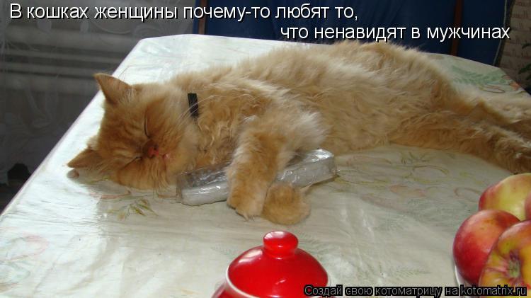 Котоматрица: В кошках женщины почему-то любят то,  что ненавидят в мужчинах