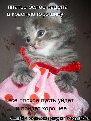 Котоматрица: платье белое надела в красную горошину все плохое пусть уйдет и придет хорошее