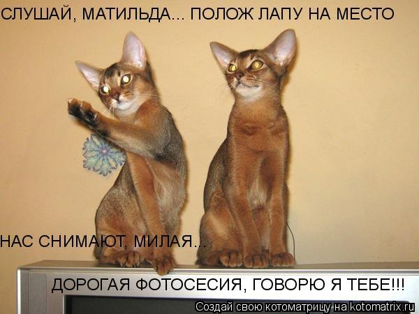 Котоматрица: СЛУШАЙ, МАТИЛЬДА... ПОЛОЖ ЛАПУ НА МЕСТО НАС СНИМАЮТ, МИЛАЯ... ДОРОГАЯ ФОТОСЕСИЯ, ГОВОРЮ Я ТЕБЕ!!!