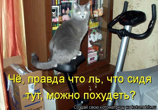 Котоматрица: Чё, правда что ль, что сидя  тут, можно похудеть?