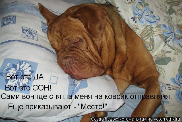 """Котоматрица: Вот это ДА! Вот это СОН! Сами вон где спят, а меня на коврик отправляют. Еще приказывают - """"Место!"""""""