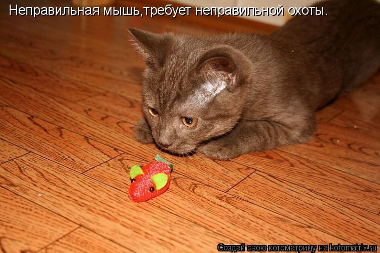 Котоматрица: Неправильная мышь,требует неправильной охоты.
