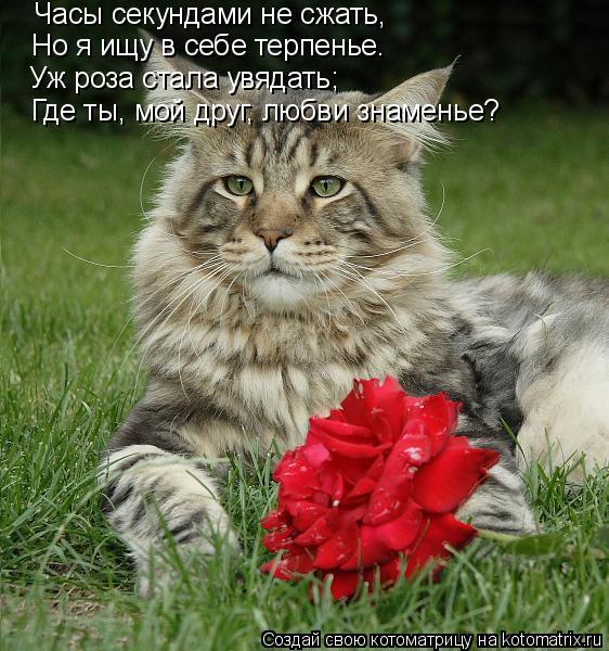 Котоматрица: Часы секундами не сжать, Но я ищу в себе терпенье. Уж роза стала увядать; Где ты, мой друг, любви знаменье?