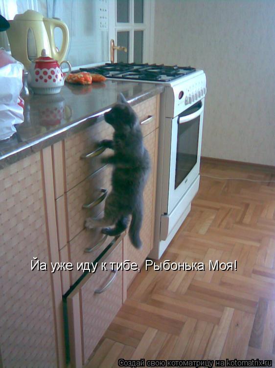 Котоматрица: Йа уже иду к тибе, Рыбонька Моя!