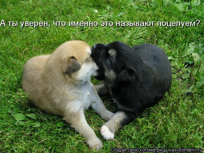 Котоматрица: А ты уверен, что именно это называют поцелуем?
