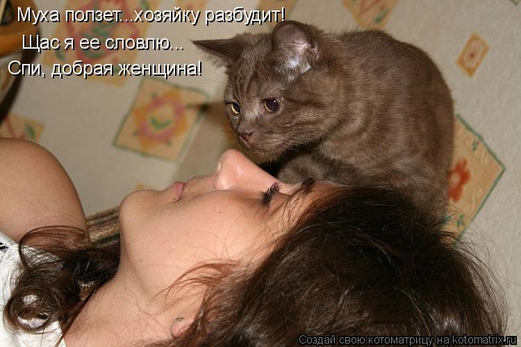 Котоматрица: Муха ползет...хозяйку разбудит! Щас я ее словлю... Спи, добрая женщина!