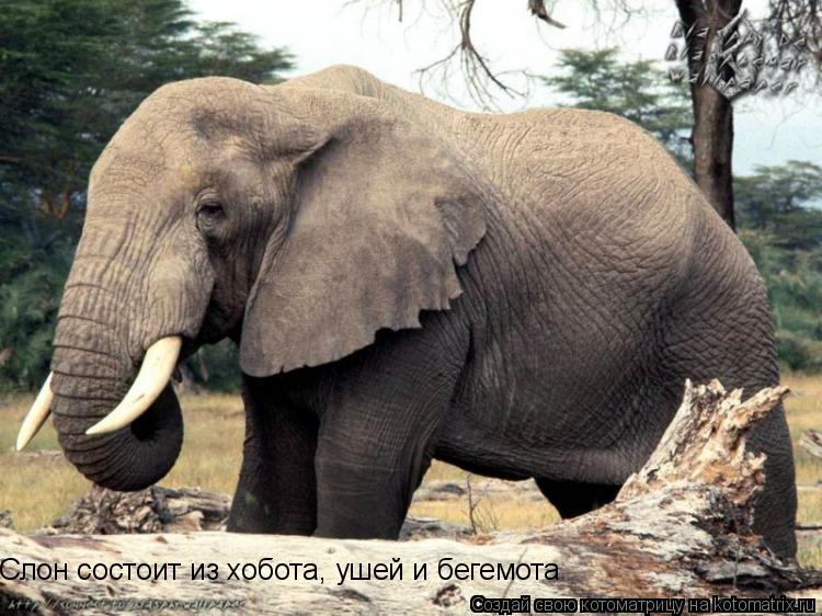 Котоматрица: Слон состоит из хобота, ушей и бегемота