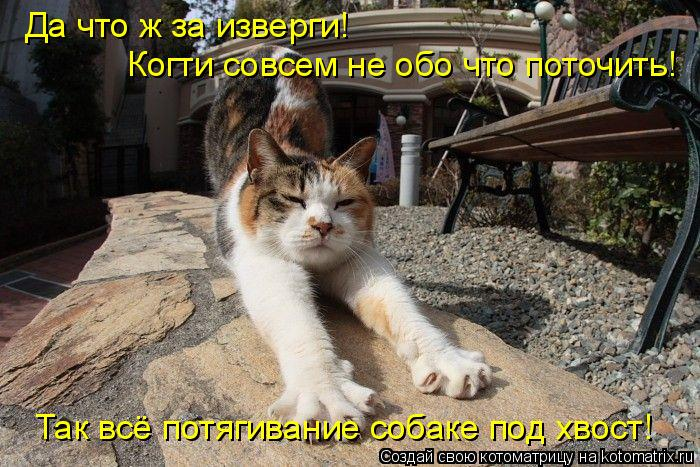 Котоматрица: Когти совсем не обо что поточить! Так всё потягивание собаке под хвост! Да что ж за изверги!