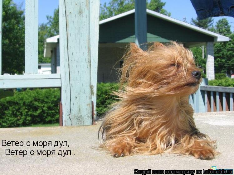 Котоматрица: Ветер с моря дул, Ветер с моря дул..