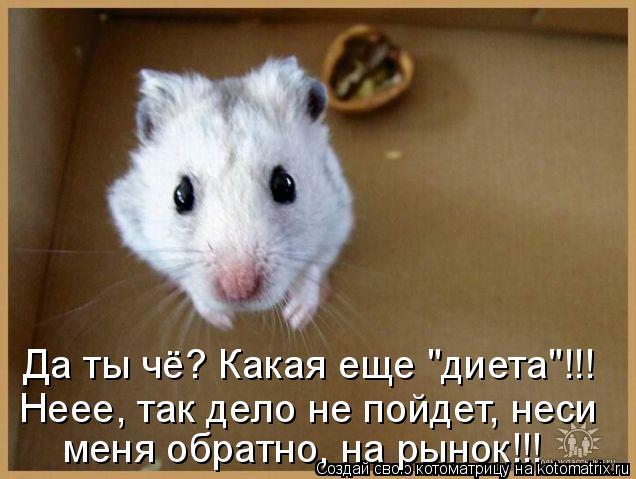 """Котоматрица: Да ты чё? Какая еще """"диета""""!!! Неее, так дело не пойдет, неси меня обратно, на рынок!!!"""