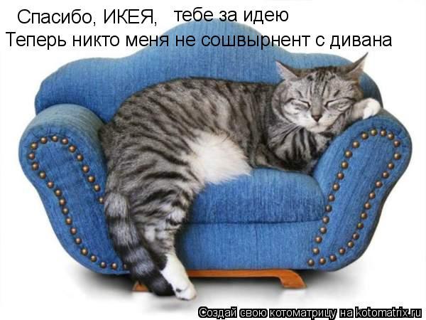 Котоматрица: Спасибо, ИКЕЯ,  тебе за идею Теперь никто меня не сошвырнент с дивана