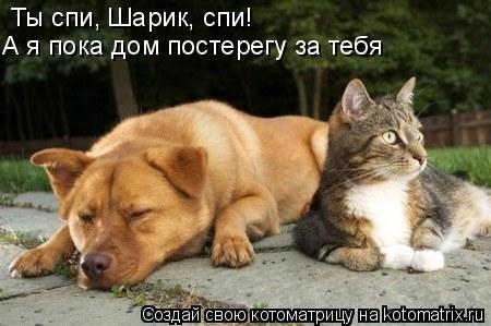 Котоматрица: Ты спи, Шарик, спи!  А я пока дом постерегу за тебя