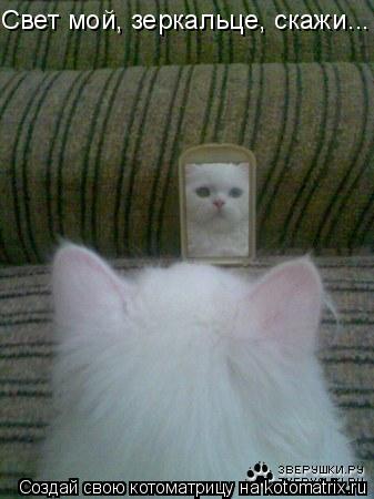 Котоматрица: Свет мой, зеркальце, скажи...