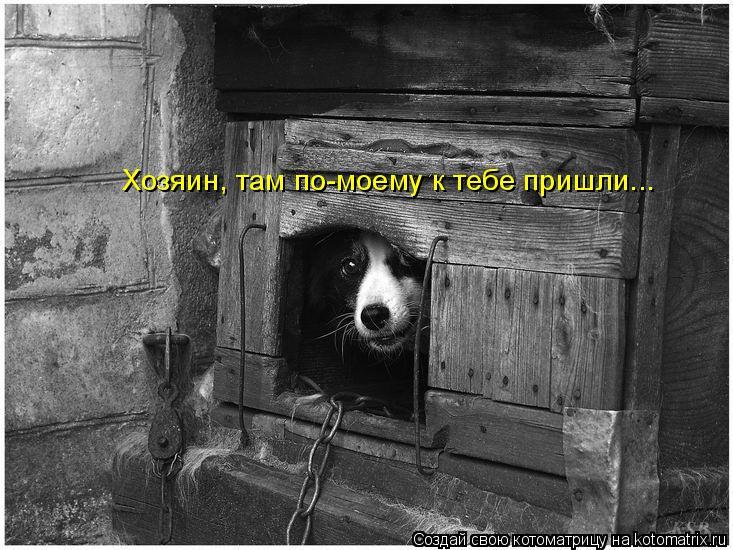 Котоматрица: Хозяин, там по-моему к тебе пришли...