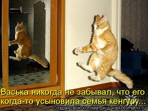 Котоматрица: Васька никогда не забывал, что его  когда-то усыновила семья кенгуру...