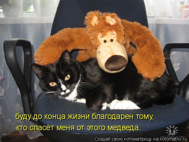 Котоматрица: буду до конца жизни благодарен тому, кто спасёт меня от этого медведа.