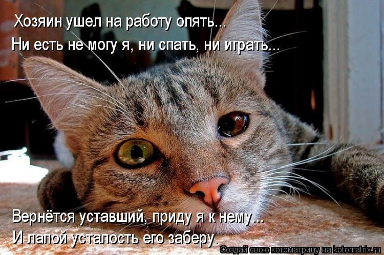 Котоматрица: Хозяин ушел на работу опять... Ни есть не могу я, ни спать, ни играть... Вернётся уставший, приду я к нему... И лапой усталость его заберу.