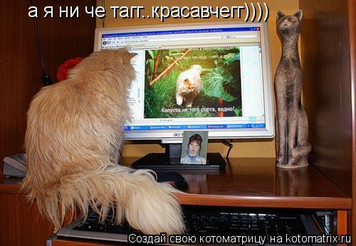 Котоматрица: а я ни че тагг..красавчегг))))