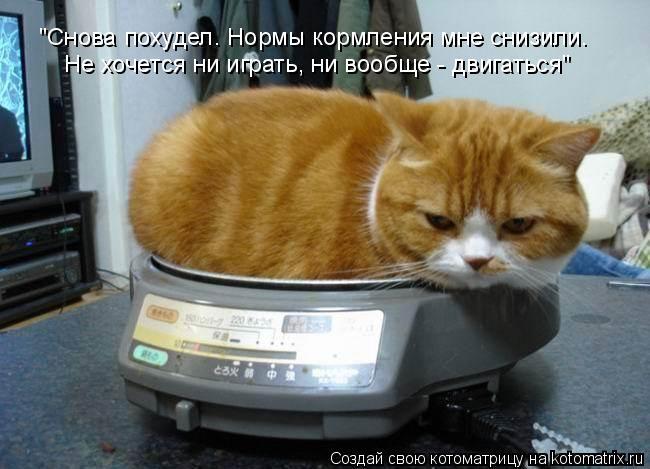 """Котоматрица: """"Снова похудел. Нормы кормления мне снизили. Не хочется ни играть, ни вообще - двигаться"""""""