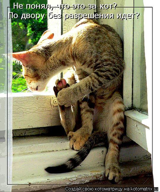 Котоматрица: Не понял, что это за кот?  По двору без разрешения идет?