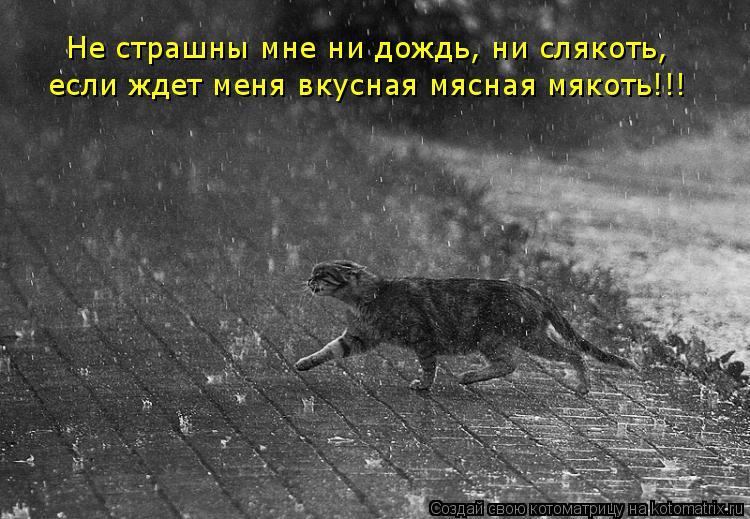 Котоматрица: Не страшны мне ни дождь, ни слякоть, если ждет меня вкусная мясная мякоть!!!