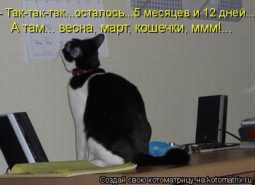 Котоматрица: - Так-так-так...осталось...5 месяцев и 12 дней... А там... весна, март, кошечки, ммм!...