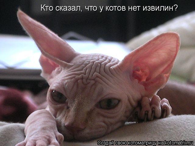 Котоматрица: Кто сказал, что у котов нет извилин?