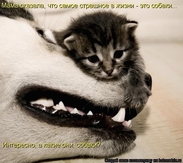http://kotomatrix.ru/images/lolz/2008/09/17/Y0.jpg