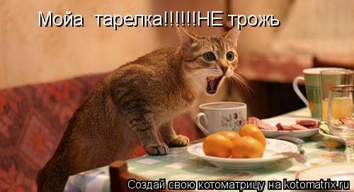 Котоматрица: Мойа  тарелка!!!!!!НЕ трожь