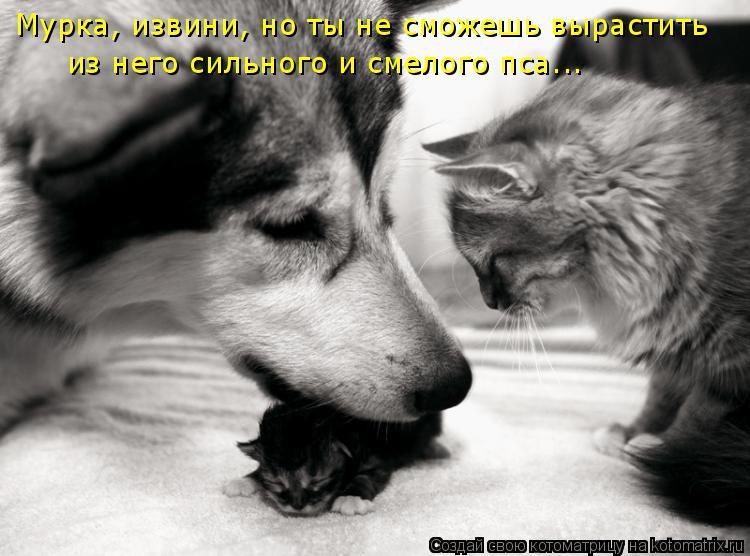 Котоматрица: Мурка, извини, но ты не сможешь вырастить  из него сильного и смелого пса...
