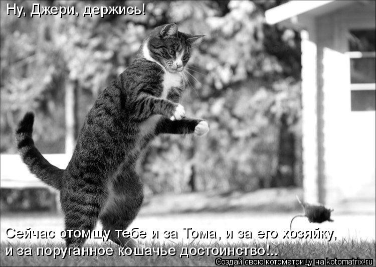 Котоматрица: Ну, Джери, держись! Сейчас отомщу тебе и за Тома, и за его хозяйку, и за поруганное кошачье достоинство!..