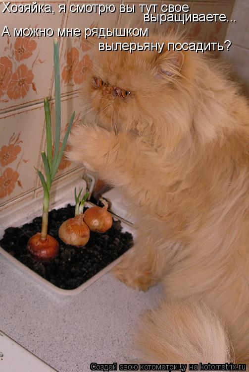 Котоматрица: Хозяйка, я смотрю вы тут свое  выращиваете... А можно мне рядышком  вылерьяну посадить?
