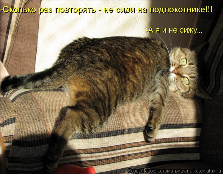 Котоматрица: -Сколько раз повторять - не сиди на подлокотнике!!! -А я и не сижу...