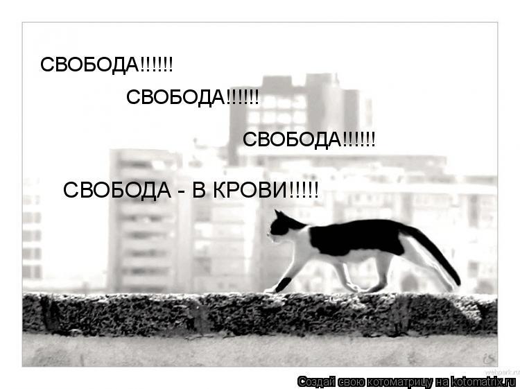 Котоматрица: СВОБОДА!!!!!! СВОБОДА!!!!!! СВОБОДА!!!!!! СВОБОДА - В КРОВИ!!!!!