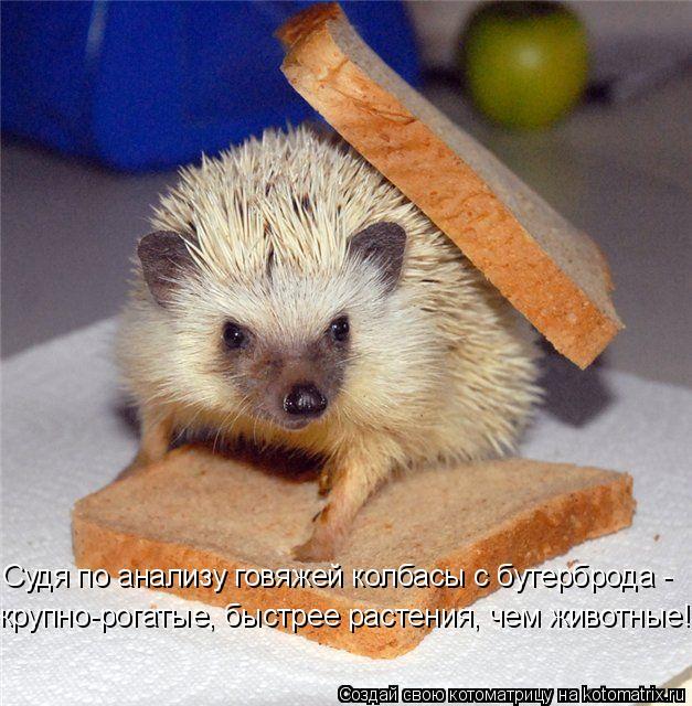 Котоматрица: Судя по анализу говяжей колбасы с бутерброда - крупно-рогатые, быстрее растения, чем животные!