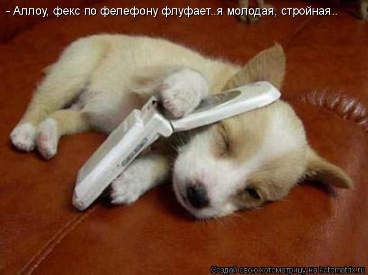 Котоматрица: - Аллоу, фекс по фелефону флуфает..я молодая, стройная..