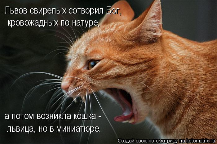 Котоматрица: Львов свирепых сотворил Бог, кровожадных по натуре, а потом возникла кошка - львица, но в миниатюре.