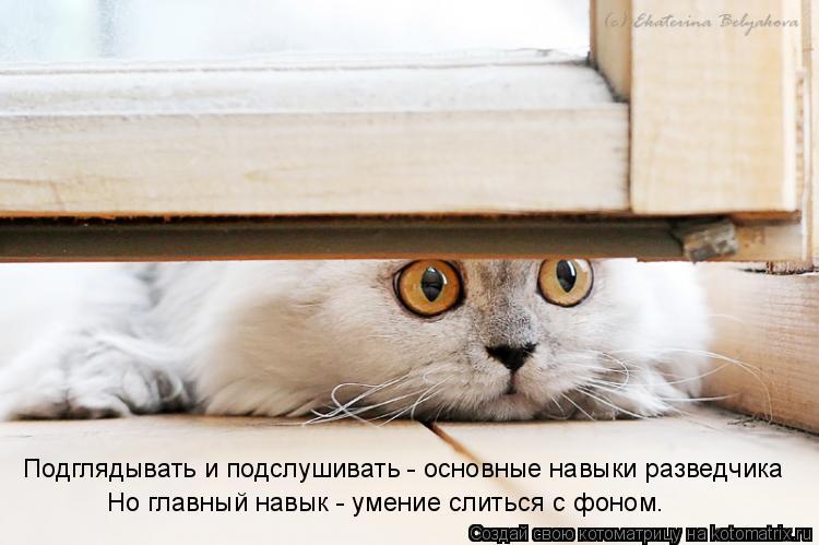 Котоматрица: Подглядывать и подслушивать - основные навыки разведчика Но главный навык - умение слиться с фоном.