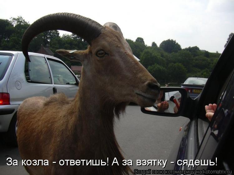 Котоматрица: За козла - ответишь! А за взятку - сядешь!