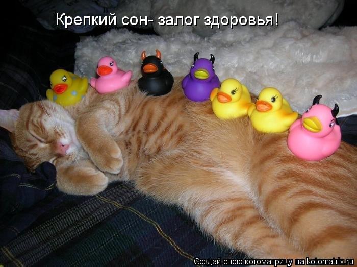 Котоматрица: Крепкий сон- залог здоровья!