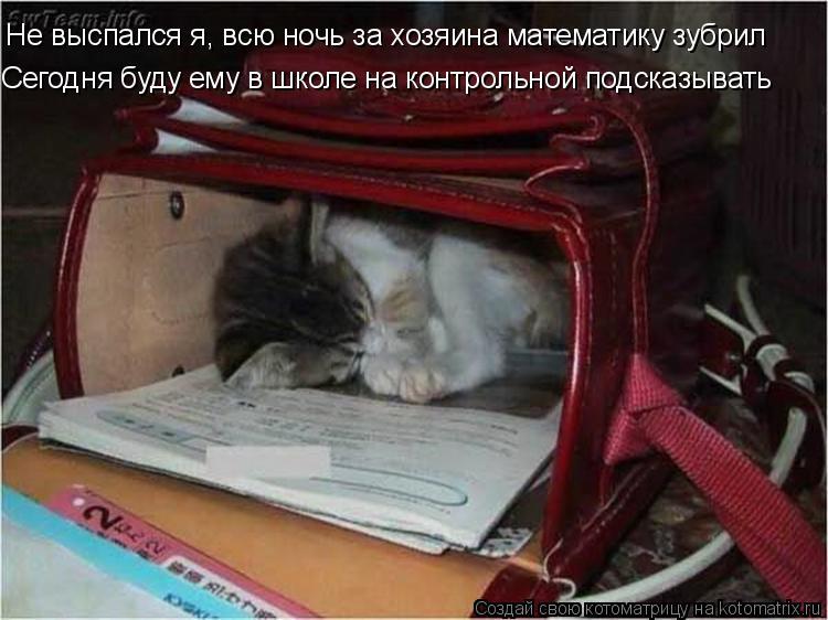 Котоматрица: Не выспался я, всю ночь за хозяина математику зубрил Сегодня буду ему в школе на контрольной подсказывать