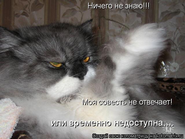 Котоматрица: Ничего не знаю!!! Моя совесть не отвечает! или временно недоступна....