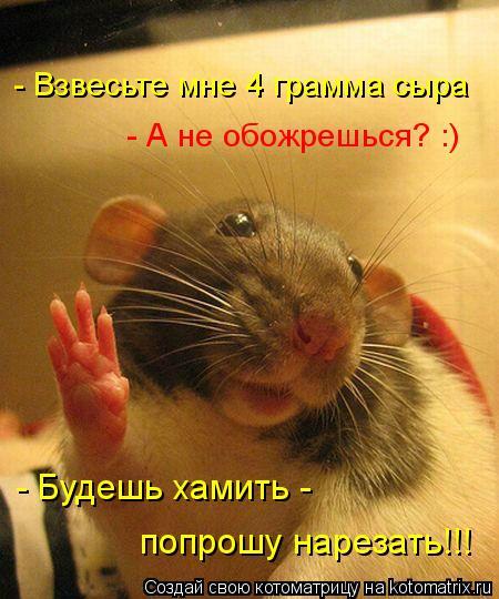 Котоматрица: - Взвесьте мне 4 грамма сыра - А не обожрешься? :) - Будешь хамить -  попрошу нарезать!!!