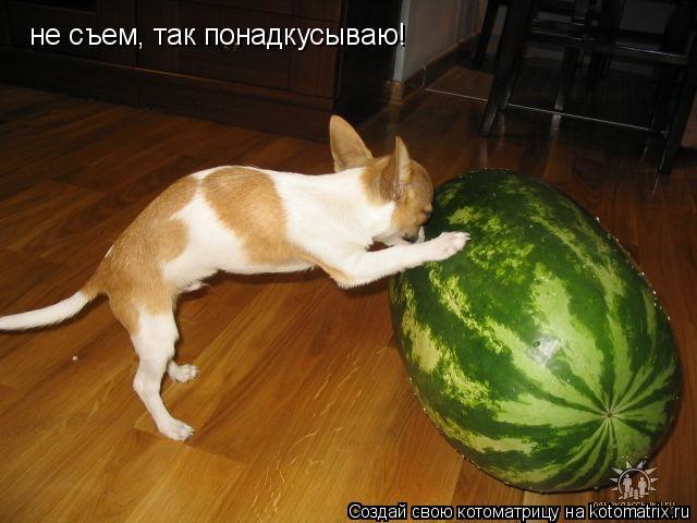 Котоматрица: не съем, так понадкусываю!