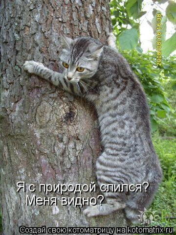 Котоматрица: Я с природой слился? Меня видно?