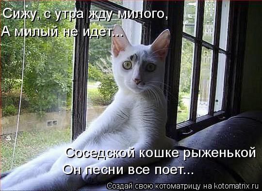 Котоматрица: Сижу, с утра жду милого, А милый не идет... Соседской кошке рыженькой Он песни все поет...