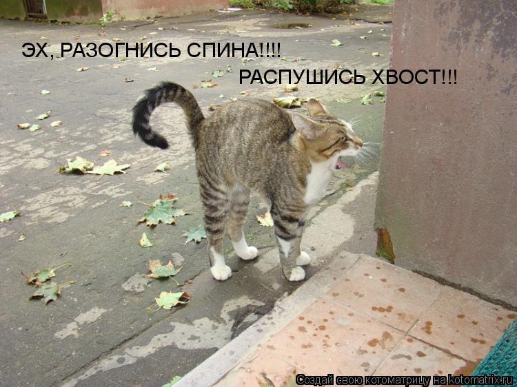Котоматрица: ЭХ, РАЗОГНИСЬ СПИНА!!!! РАСПУШИСЬ ХВОСТ!!!