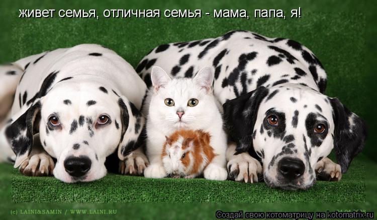 Котоматрица: живет семья, отличная семья - мама, папа, я!