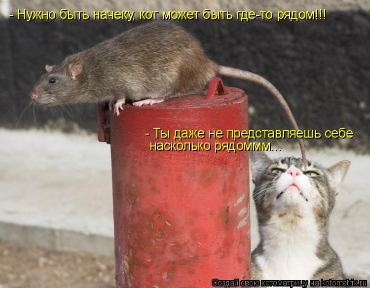 Котоматрица: - Нужно быть начеку, кот может быть где-то рядом!!! - Ты даже не представляешь себе насколько рядоммм...